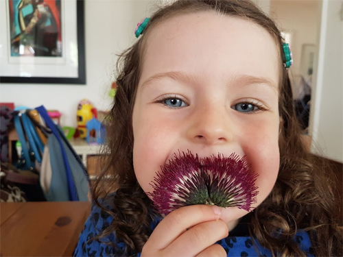 A pressed cirsium looks like a funny moustache!