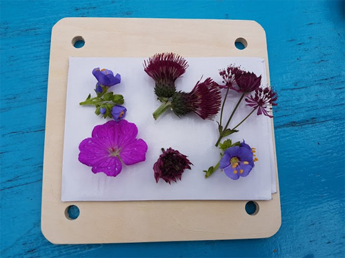 Lay your flowers out in your flower press
