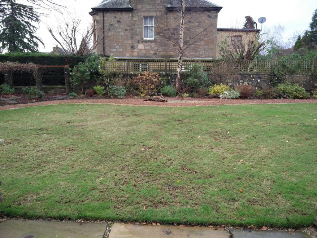 Before: some lawn & little interest