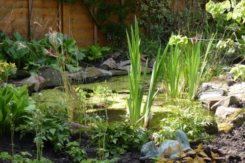 A new wildlife pond