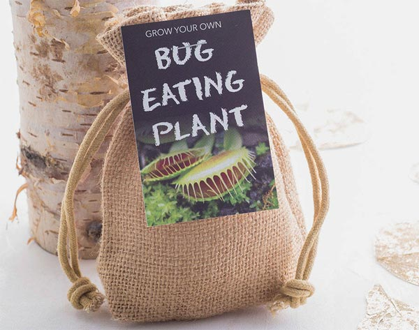 Watch out for this bug eating plant, snap!