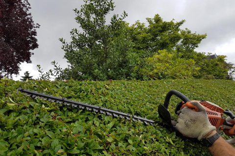 hedgetrimming stirling