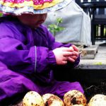 Lulu growing potatoes