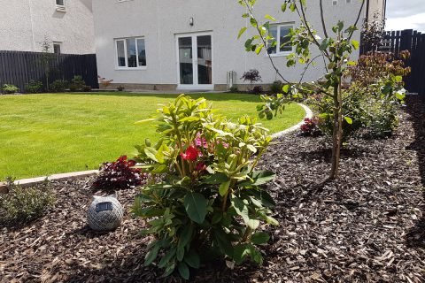 Low maintenance planting surrounds the lawn
