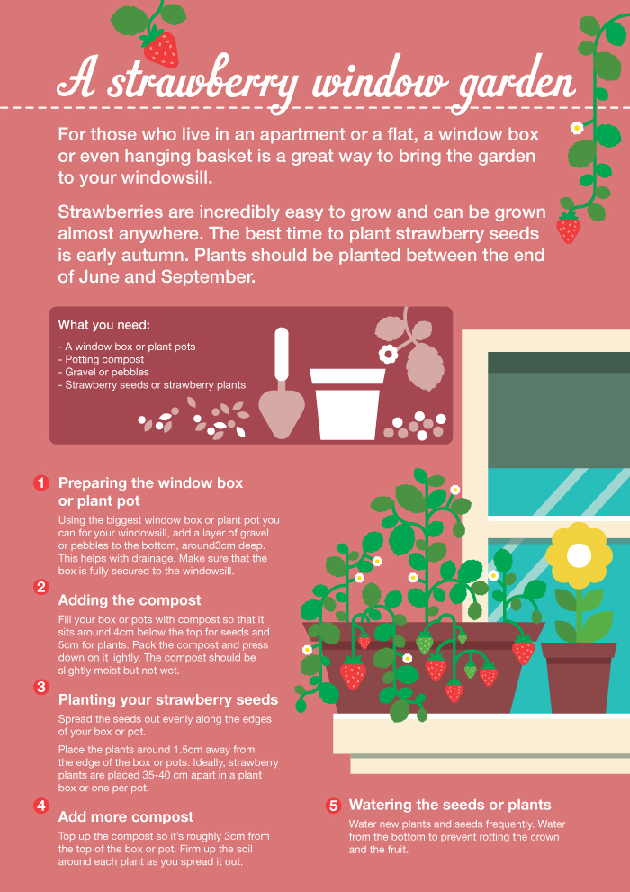 Sainsbury's Bank Guide to Grow your own strawberries