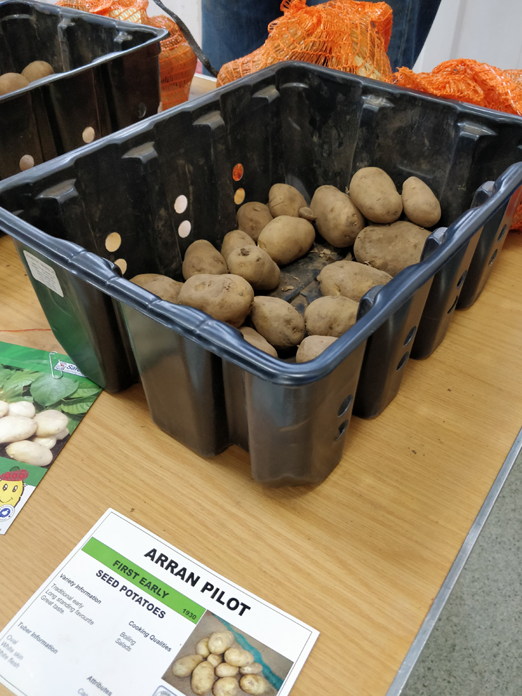Potato Day in Dunblane