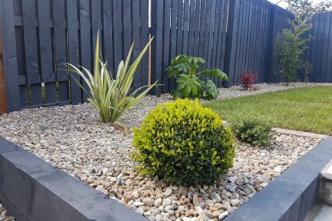 Box balls and phormium create strong shapes in the garden