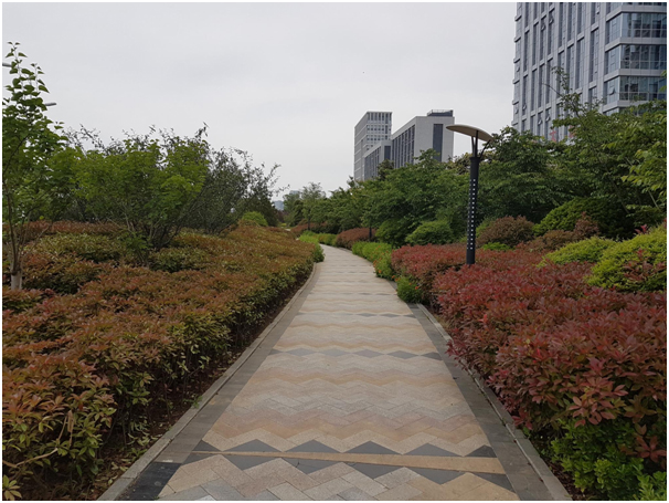 How beautiful is this patterned path through planting?