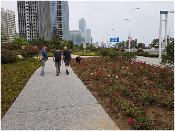 A rose bed is carefully tended to keep it looking beautiful. It will certainly help with the pollution and lovely to have nice wide paths away from the roadside.