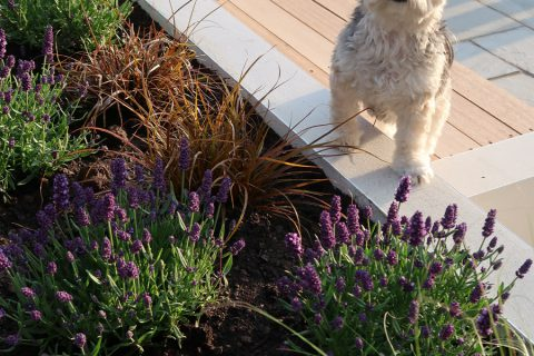 Every new garden should have a Maisie!