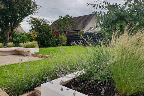A lovely view through the lavender across the new garden