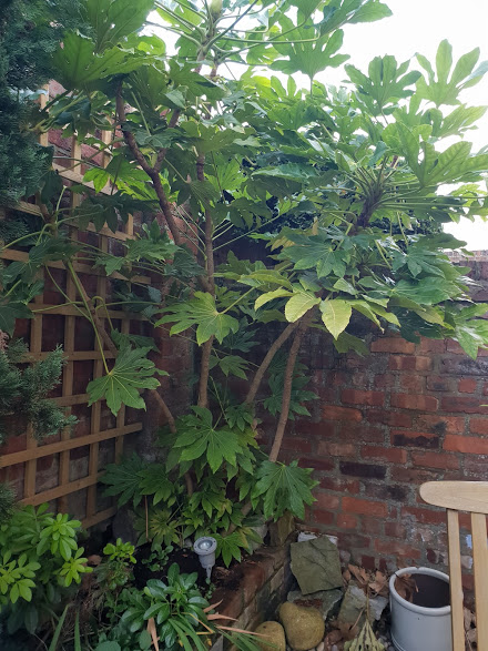 Add lush planting which adds height and trellis to cover the boundaries
