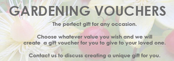 A Vialii gift voucher, the perfect gift this Christmas