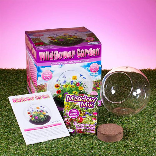 A beautiful terrarium of your own