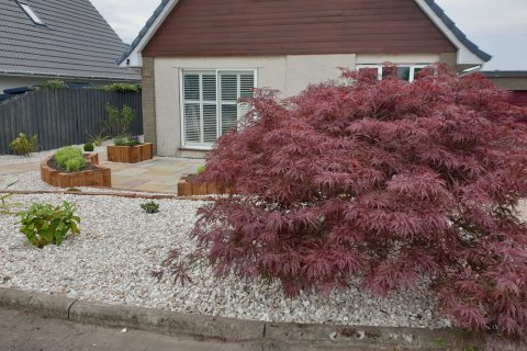 The beautiful existing acer was retained