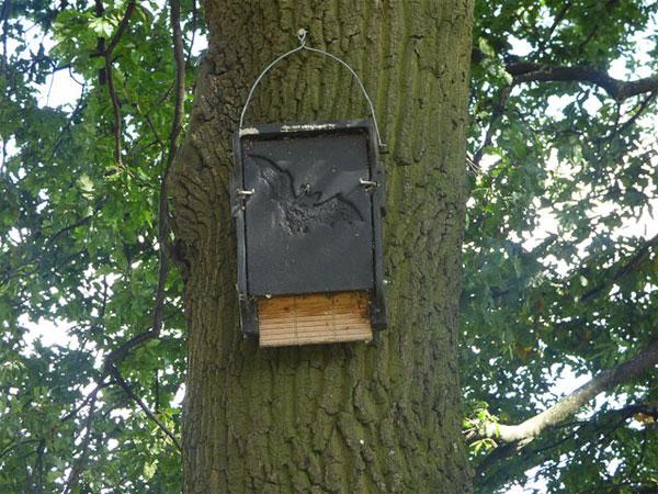 East Park - bat box cc-by-sa/2.0 - © Stephen Craven - geograph.org.uk/p/5517504