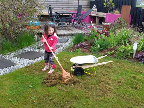 An ickle Lulu scarifying our lawn