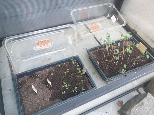 Slowly get your seedlings used to being outdoors by sitting them outside during the day