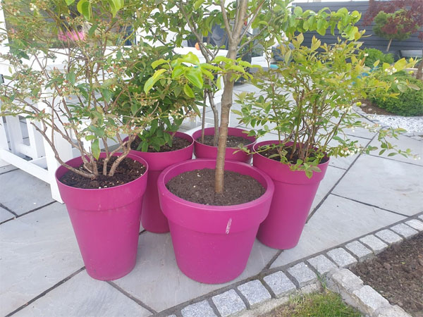 With high winds forecast its worth taking the time to huddle your pots together for protection