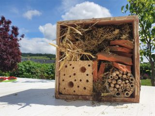 Fill your bug hotel with lots of things for creepy crawlies to hide in