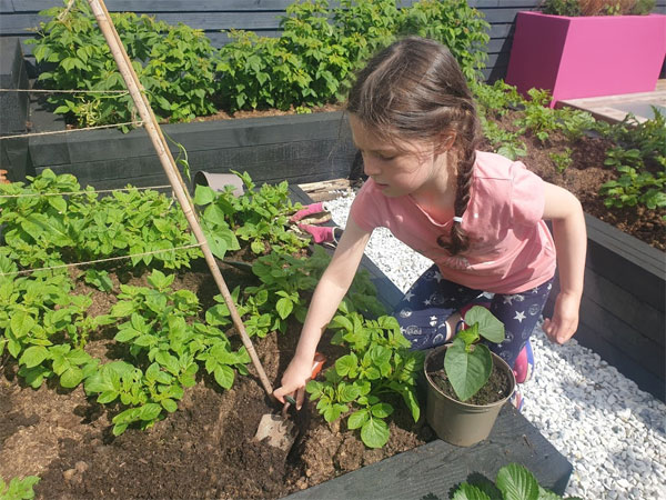 Lulu planted the beans as companion plants to our potatoes