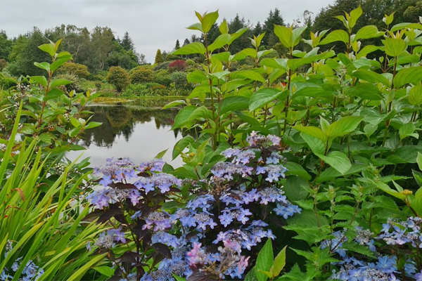Beautiful planting is pristinely maintained at Glenwhan Gardens