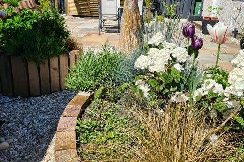 Beautiful curving raised beds