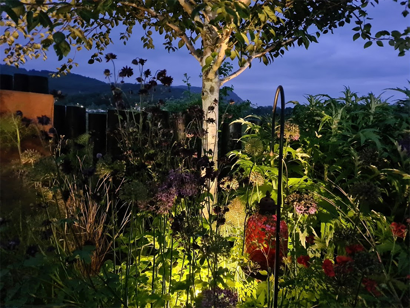 Uplighting in planting creates a gorgeous glow